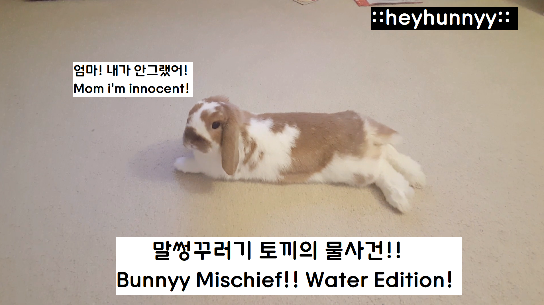::YOUTUBE:: Bunny Mischief!!