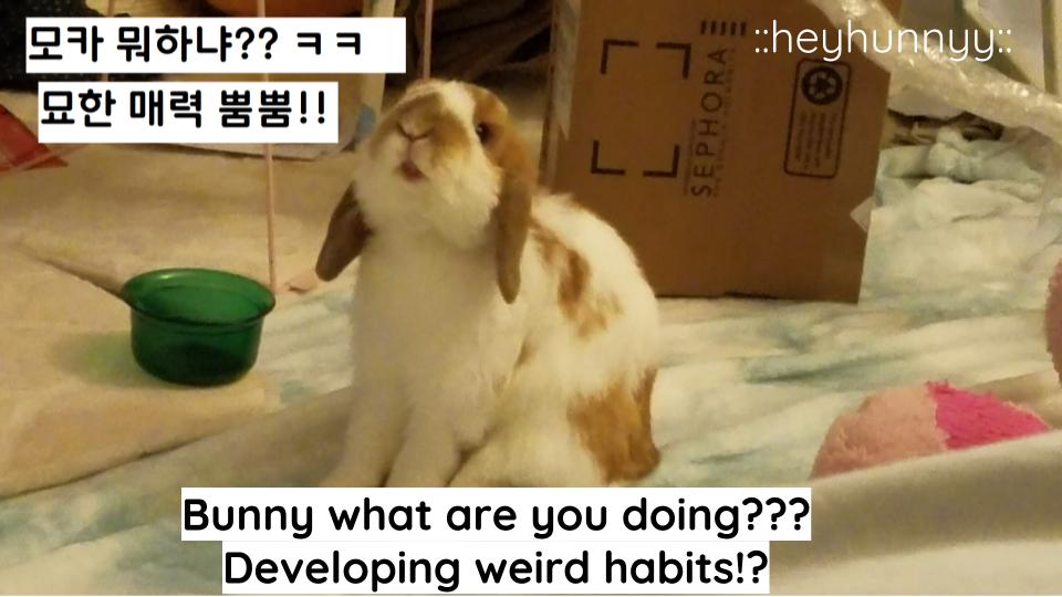 ::YOUTUBE:: Bunny STOP IT! LOL